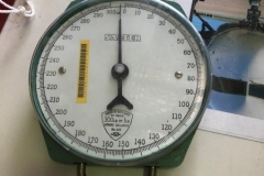 Scales PN Salter 300 lb SN HYD37